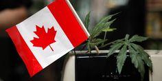 Canadá se moviliza para legalizar la marihuana El Cannabis Culture Lounge tiene todo lo que un fumador podría necesitar para sentirse como en su casa: cogollos de marihuana a US$ 3, bolsas de Doritos y sillones de cuero negro donde los cli...