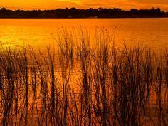 Grass on Lake Shore at Sunrise 2