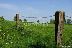 Kaputter Weidezaun auf der grünen Wiese