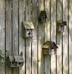 Looks just like my back fence right now! The squirrels have chewed a few of the openings to get to the bird eggs though.