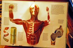 10 amazing facts about Human Body - Facts n Myths
