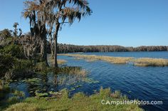 Lake Louisa State Park in Central Florida