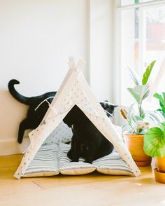 Dog And Teepee - more than just a dog bed. We've created a space that your fur babies will love calling home. Bed Tent, Teepee Tent, Teepees, Cat Teepee, Cats Playing, Take A Nap, Black Cats, Ottawa, Cat Love