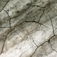 Let's play a game! $2.00 coupon goes to whoever can guess what this is an up close picture of:  I will accept answers via comment or message on fb, instagram, Etsy or Treemagination@gmail.com   I'll post the answer on Sunday 6/4