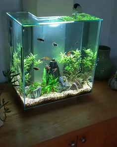 """The Fish Are Happy After Their Water Change """"Fluval Edge 46 L"""" - salt water fish tank Betta Aquarium, Aquarium Aquascape, Tropical Fish Aquarium, Betta Fish Tank, Home Aquarium, Nature Aquarium, Biorb Fish Tank, Glass Aquarium, Freshwater Aquarium Fish"""