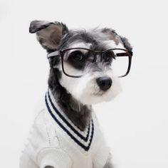 Il sito e-commerce Mr Porterha scelto alcuni cani per mostrare le tendenze moda della primavera/estate 2015. Lo store online (costola menswear del celebre Net-A-Porter) ha inizialmente pubblicato ...