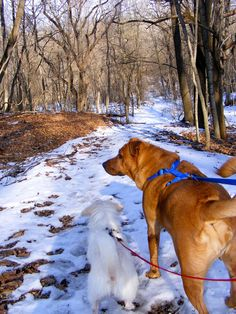 "Dd you know that taking a walk in the woods with your pet can give him/her the essential familiarization experience for disaster survival? This & more info in ""Prepping with Pets,"" another great article from the American Preppers Network!"