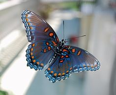 borboleta roxa - Pesquisa Google
