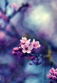 color palate for wedding cherry blossom flowers