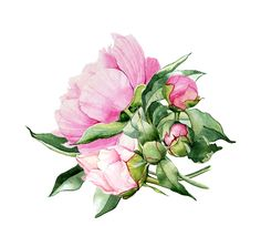 Flowerfull branding on Behance Peony Painting, Watercolor Plants, Watercolor Cards, Floral Watercolor, Watercolor Paintings, Watercolors, Botanical Art, Botanical Illustration, Watercolor Illustration