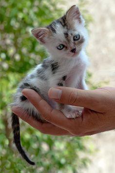 Un micio molto grazioso, così piccolo da entrare nel palmo della mano