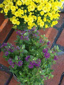 Lifestyle-blogi - Willa Lemmelle : Puutarhan satoa Lifestyle, Plants, Plant, Planets