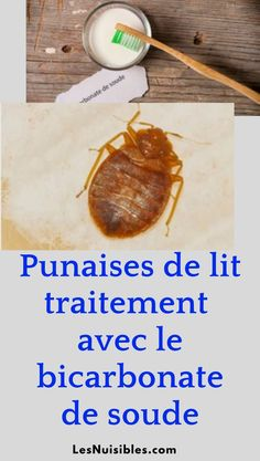 Voici comment le traitement d'une infestation de punaises de lit avec le bicarbonate de soude. Infestation, Before And After Weightloss, Weight Loss Transformation, Voici, Pork, Health, Psoriasis Remedies, Homemade Insecticide, Bed Bugs