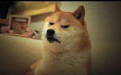 Image result for doge