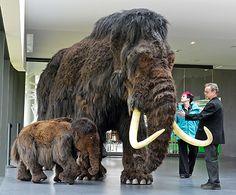 Reproducciones de mamuts en la exhibición 'Gigantes de la edad de hielo' en Nebra, Alemania