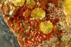 Calcurmolite (jaune) avec Umohoite (rouge) et Uranophane (blanc).  Rabejac, Lodève, Hérault, Languedoc-Roussillon, France Taille=3 mm Copyright Stephan Wolfsried
