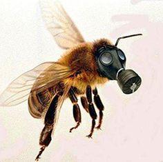 OCA: Tell Your Representative: Please Support the Saving America's Pollinators Act (H.R. 2692)