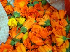 Vivacious, happy calendula blossoms are a delight to grow and use in herbal remedies for everyone in the family. Come learn all about it in today's post. Identify Plant, Marigold Flower, The Face, Calendula, Medicinal Plants, Alternative Medicine, Kraut, Herbal Remedies, Essential Oil Diffuser