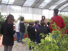 No dia 26 de março, as alunas e os alunos do 3.º, 4.º e 5.º anos foram até aos Viveiros da Câmara Municipal da Amadora. Uma atividade desenvolvida no âmbito do program Eco-Escolas. Para além de conhecerem novas espécies vegetais, ainda ajudaram a plantar uma amoreira! #colegiodealfragide #amadora #portugal #programaecoescolas #1e2ciclos