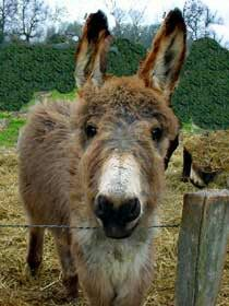Wee donkey                                                                                                                                                                                 Mehr