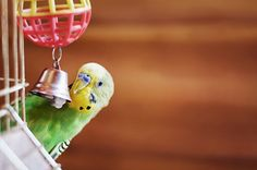 "Why You Should Teach Your Bird These 3 Words: ""Foot, Water, Food"" 