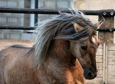 Merveillous, le cheval de ma vie - Page 2