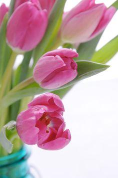Valentine's Day Tulips   photo by Ez Pudewa (that's me)