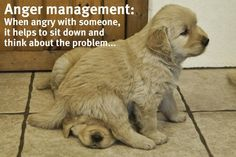 Anger management: when angry with someone, it helps to sit down and think about the problem..