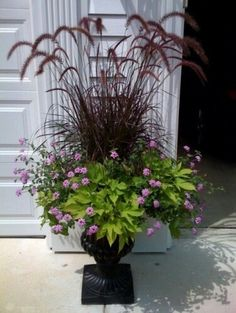 Purple plume grass.  Althought mine did not come back this spring.....FOUND IT!  MAKE THESE!!!