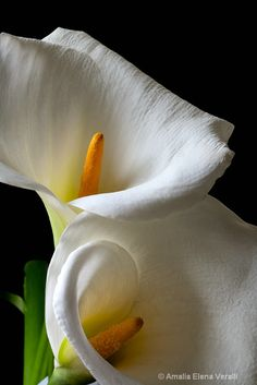 calla, lily, white, flower, macro - Photograph at amaliaphotography.com