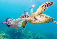 I love my sea turtles!!!!  I wish I had seen one while snorkeling in St. Lucia!