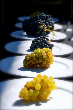 Bunches of grapes in the sunshine - Napa Valley
