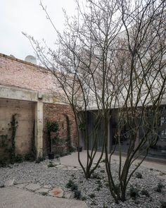 Juergen Teller Studio, London, April Designed by Architects and built by Harris Calnan. Photograph by Johan Dehlin. Juergen Teller, Small Gardens, Outdoor Gardens, Modern Gardens, Landscape Design, Garden Design, Dan Pearson, Architecture Courtyard, Architects London