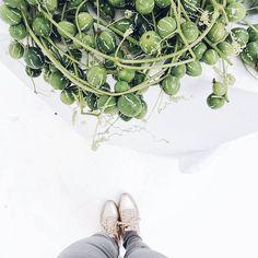 Einfach so weil äußerst fotogen...  . Und ich bleibe bei meinem Wunsch nach einem weißen Fußboden...  . Mehr Fotos davon zu Stillleben Wüsten-Stylings und mein Deko-Yoga... -> #aufdemblog #neuerblogpost #direktlinkimprofil #easypeasyanklickbar . Just because it is photogenic... More: #onmyblog #linkinprofile #linkinbio #newblogpost . #fromwhereistood #fromabove #halfie #shoes #shoesoftheday #sisterMAGlovesCEWE @sister_mag @stilzitat #freude_teilen #photokinacewe #bloggerontour #bloggerevent…