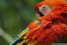 Pássaros da Amazônia