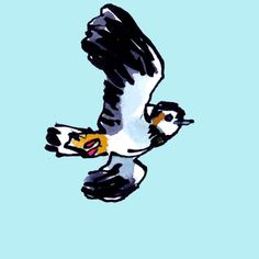 Hand drawn animated gif: Lapwing flying.