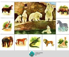 "A legfontosabb: Állatkert BINGO ""az állatvilágban"" Kids Learning Activities, Infant Activities, Diy Toys And Games, Shapes For Kids, Environmental Studies, Bird Cards, Bible Crafts, Animals For Kids, Wild Animals"