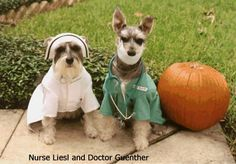 The Witches Closet.: Top Pet Halloween Costumes Picks from The Witches ...