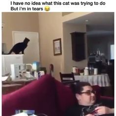 You can't understand the cats 😆 – Witzig – Animals Funny Animal Memes, Funny Animal Videos, Funny Animal Pictures, Cute Funny Animals, Cat Memes, Cute Baby Animals, Funny Cute, Cute Cats, Funny Memes