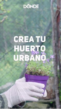 Eco Garden, Home Vegetable Garden, Fruit Garden, Green Books, Useful Life Hacks, Compost, Garden Landscaping, Indoor Plants, Healthy Life