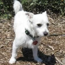 23 best dogs images on pinterest dog supplies dog cat and dog treats meet hobbes a petfinder adoptable jack russell terrier dog petaluma ca this rohnert parkjack solutioingenieria Image collections