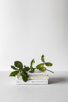 Minimal 90 Best Free Minimal White Wallpaper And Plant Photos On Unsplash Minimalist Photos Spring Cleaning Stock Photography Free
