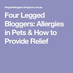 Four Legged Bloggers: Allergies in Pets & How to Provide Relief