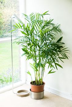 Non Toxic House Plants For Children Cats And Dogs The