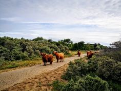 Walking Routes, The Dunes, Beach Walk, Nature Reserve, Long Distance, Beautiful World, Paths, Holland