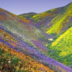 Flowers in the Valley of California