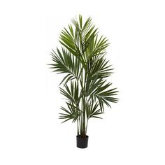 Nearly Natural Green 7 Foot Kentia Palm Silk Tree (235 AUD) ❤ liked on Polyvore featuring #home, #home decor, floral decor, tropical palms, green home decor, kentia palm, nearly natural and green home accessories
