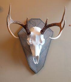 European Skull Mount Plaque