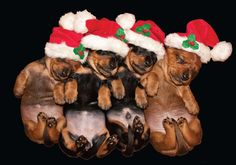 Quality Merry Christmas & Happy New Year Cards Cute & Comedy Santa Dogs Puppies