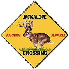 Jackalopes of Wyoming – Myth or Reality? Loving Texas, Lone Star State, Texans, Art Fair, Livestock, Wyoming, Westerns, Beast, Wildlife